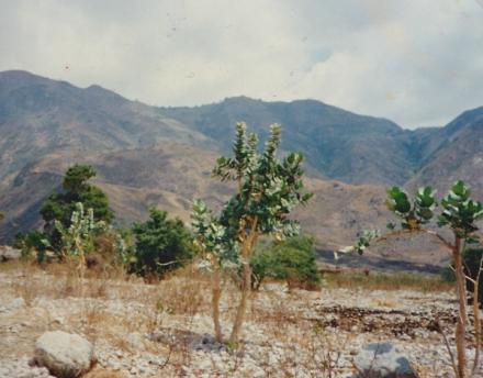haiti land damage
