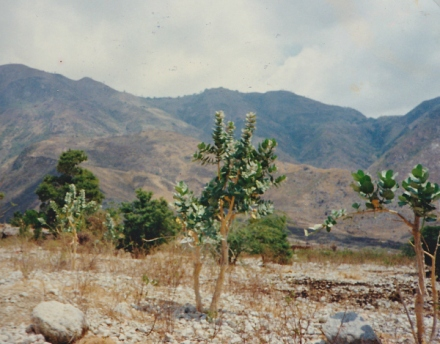 haiti land damage